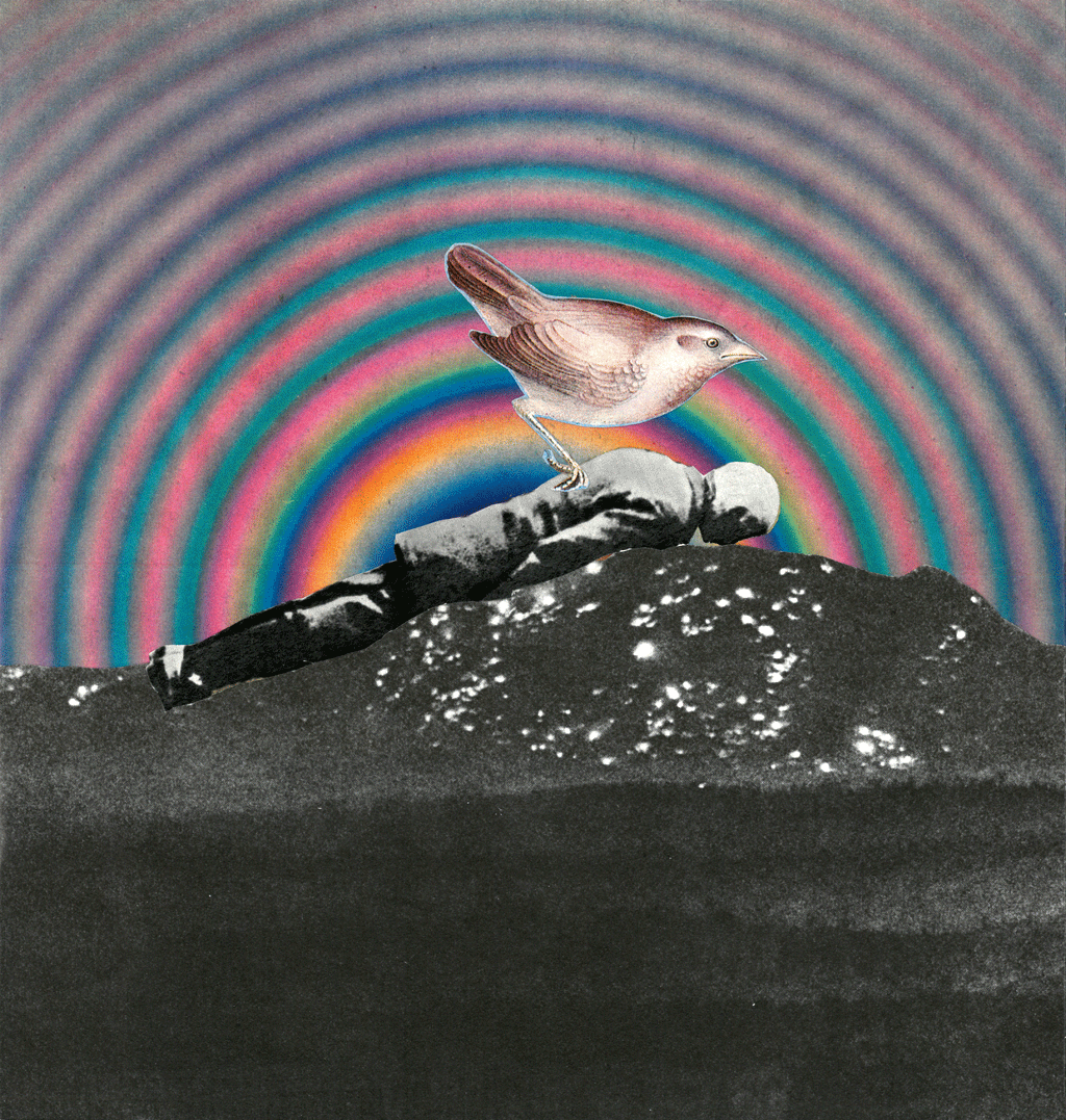 collage-bird